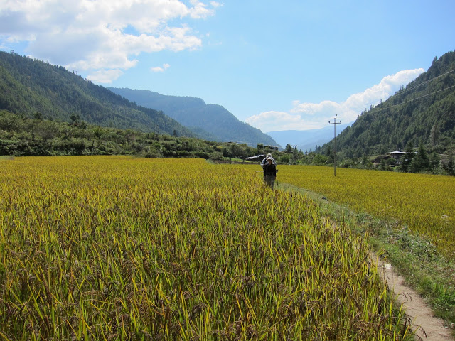 Rice fields on day one of our trek.